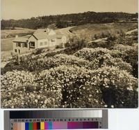 Barrett Residence, 373 Palos Verdes Drive West, Palos Verdes Estates.