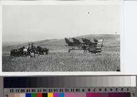 Farmhands with mule-team, wagons and threshing machine on the Phillips Ranch,...