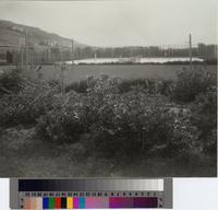 Basketball field and tennis courts at Malaga Cove School, Palos Verdes Estates,...