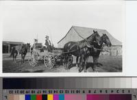 Harry Phillips Sr. in horse-drawn wagon on Phillips Ranch.