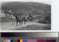Horse-drawn wagon hauling water on Phillips Ranch, Rolling Hills Estates