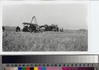 Barley thresher on the Phillips Ranch, Rolling Hills Estates
