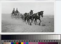 Thresher and horse-team on the Phillips Ranch, Rolling Hills Estates