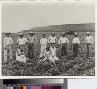 Group of Japanese farmers and family members in agricultural field, Palos Verdes...