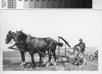 Harry Phillips Jr. and horse-drawn mower at the Phillips Ranch, Rolling Hills...