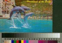 """Leaping Dolphin Trio, Marineland of the Pacific"""