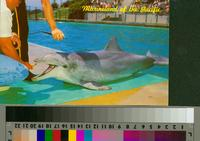 """Flipper, The Talking Dolphin, Marineland of the Pacific"""