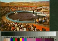 """'Whale Show Time, Marineland of the Pacific"""