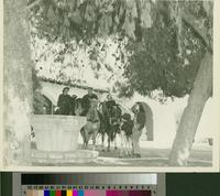 Horseback riders under pine trees