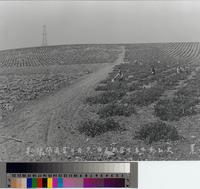 Agricultural fields with Japanese farmers