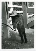 Horse wearing a hat with a recycling symbol