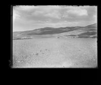 Agricultural fields, Palos Verdes Estates, California