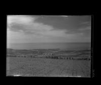 Agricultural fields, Palos Verdes Estates, California