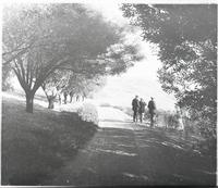 Three men standing on tree-lined road