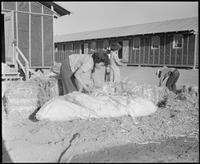 """Poston, Arizona. Evacuees of Japanese ancestry are filling straw ticks for..."