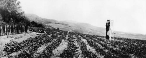 Image shows view of pea fields in Palos Verdes. Visible are an instrument shelter at Weather Station E to collect meterological data and a man on a crate-like stand looking into the station., Library has digital image only, courtesy of the Los Angeles Public Library., Los Angeles Public Library Photo Collection Identifier:00047180., Title taken from the Los Angeles Public Library., Originally from the Security Pacific National Bank Collection., Image also included in Vanderlip Family Photo collection:   https://palosverdeshistory.org/islandora/object/pvld%3A7471.